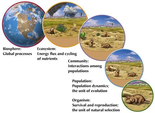 Levels of Ecology
